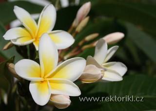 Jeden z květů v zahradě horlu Amopi Bay