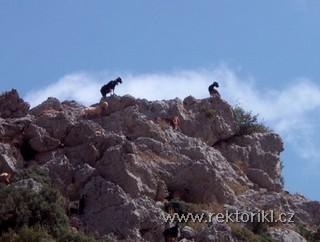Kozí stádo nad Agios Paraskevi